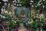 Фото 5 Клематисы в ландшафтном дизайне (45 фото): роскошное украшение двора