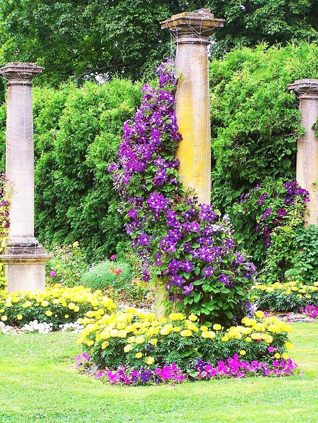 С помощью клематис и декоративных столбов можно сценически оформить сад