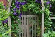 Фото 10 Клематисы в ландшафтном дизайне (45 фото): роскошное украшение двора