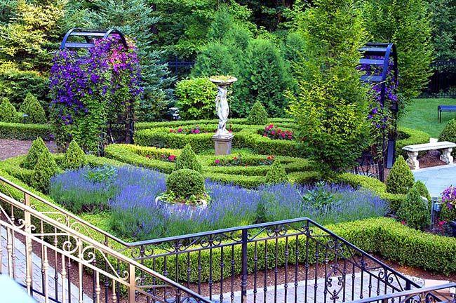 Клематис это цветок для любителей живой изгороди из цветущих лиан