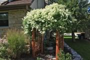 Фото 14 Клематисы в ландшафтном дизайне (45 фото): роскошное украшение двора