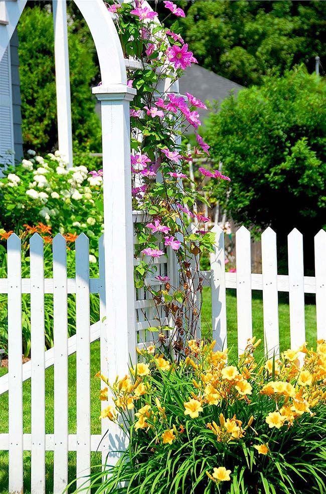 Многоликие и необычайно красивые клематисы - давняя любовь многих садоводов