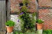 Фото 18 Клематисы в ландшафтном дизайне (45 фото): роскошное украшение двора