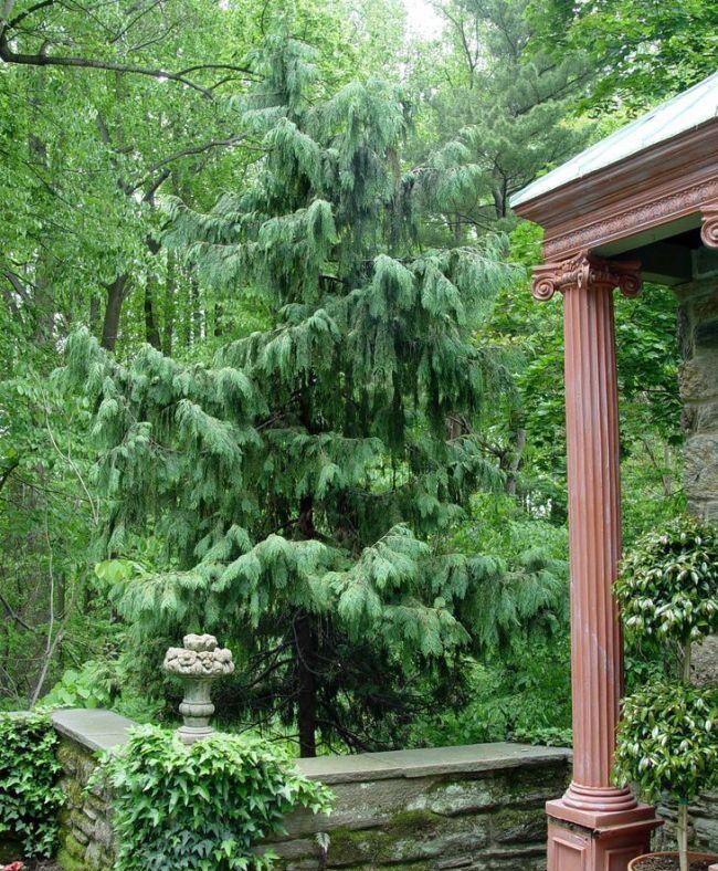 Глубина посадки лиственницы - 70-80 сантиметров