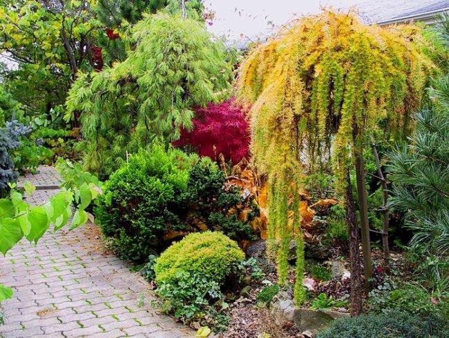 Яркая и очаровательная осенняя лиственница