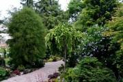 Фото 9 Лиственница (42 фото) — красавица с опадающей хвоей: виды, свойства, посадка, уход