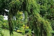 Фото 16 Лиственница (42 фото) — красавица с опадающей хвоей: виды, свойства, посадка, уход