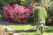 Фото 1 Лиственница (42 фото) — красавица с опадающей хвоей: виды, свойства, посадка, уход