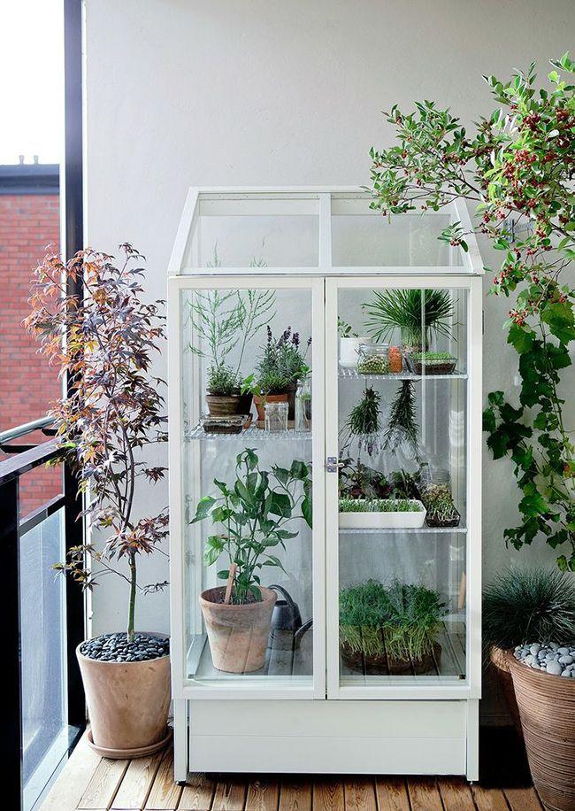 Летом можно вынести комнатные растения на лоджию и поставить их в стеклянный шкафчик