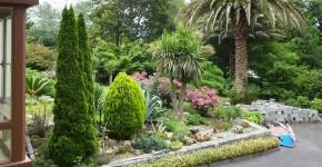 Туя: посадка и уход — зеленые пирамиды живых изгородей и тенистых аллей в нашем саду фото