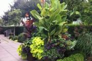 Фото 17 Цветок канна (45 фото): все о видах, размножении, посадке и уходе
