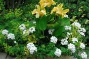 Фото 19 Цветок канна (45 фото): все о видах, размножении, посадке и уходе