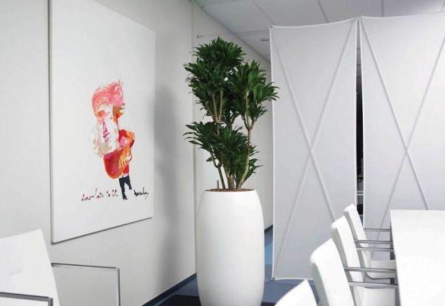 Драцена прекрасно уживается в офисных помещениях