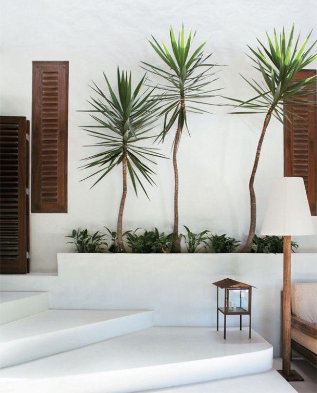 Драцена похожа на пальму и способна создать в вашем доме особый южный колорит