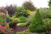 Фото 8 Канадская ель (44 фото): северная красавица в садах умеренных широт