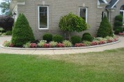 Фото 16 Канадская ель (44 фото): северная красавица в садах умеренных широт