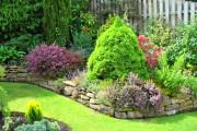 Фото 13 Канадская ель (44 фото): северная красавица в садах умеренных широт
