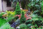 Фото 2 Канадская ель (44 фото): северная красавица в садах умеренных широт
