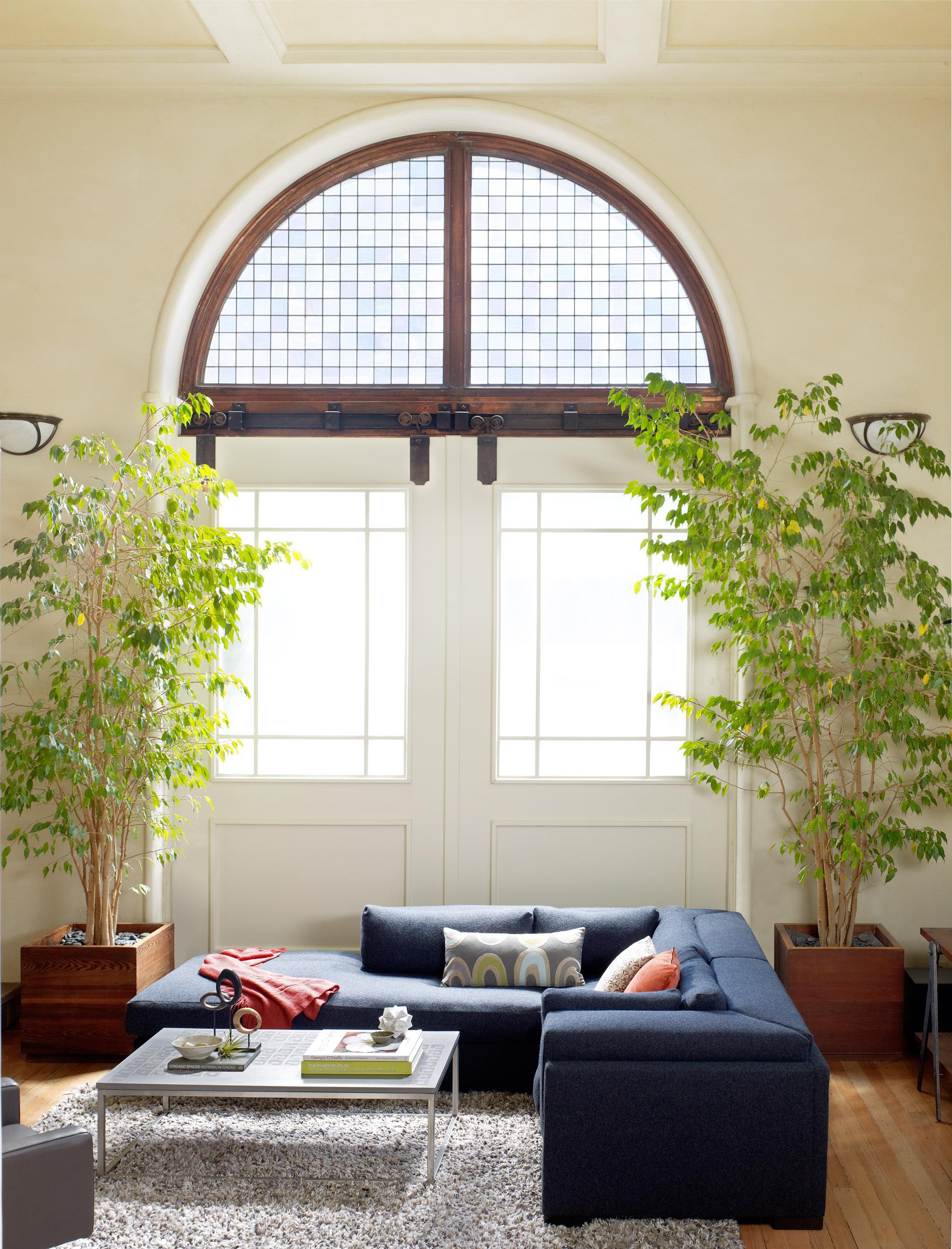 Ажурные деревца фикуса, размещенные симметрично от арочного оконного проема, сформировали комфортную обстановку вокруг зоны отдыха