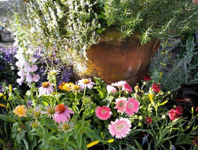 Гербера - прекрасный цветок для высаживания в саду