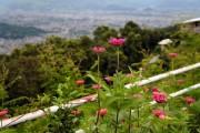 Фото 8 Гербера (50 фото цветов): виды и правила ухода