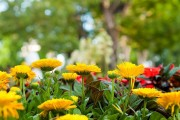 Фото 11 Гербера (50 фото цветов): виды и правила ухода
