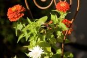 Фото 18 Гербера (50 фото цветов): виды и правила ухода