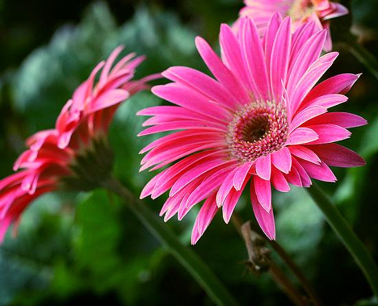 Изысканное украшение вашего сада