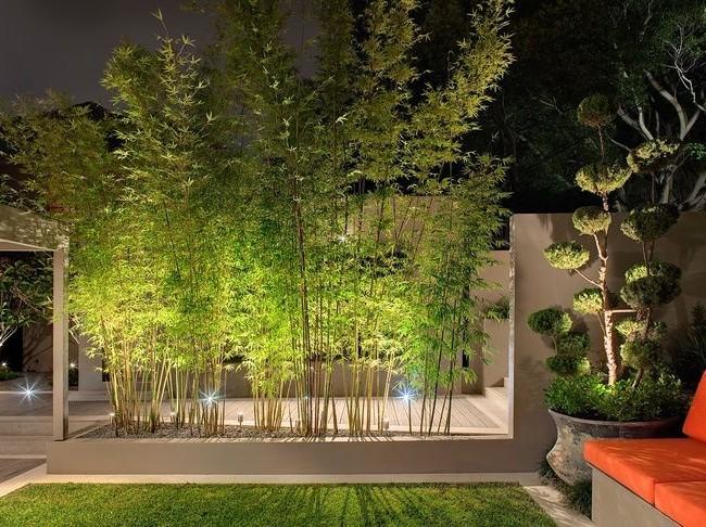 Изящные деревья выглядят особенно воздушно в вечернем свете