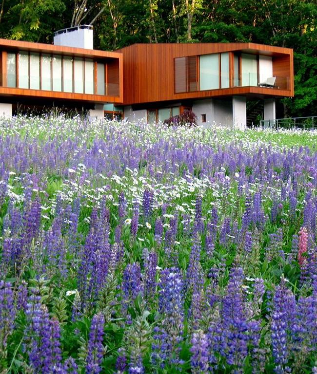 Роскошный ковер нежных белых и голубых цветов перед домом