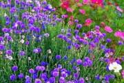 Фото 4 Мавританский газон (44 фото): простой способ украсить сад