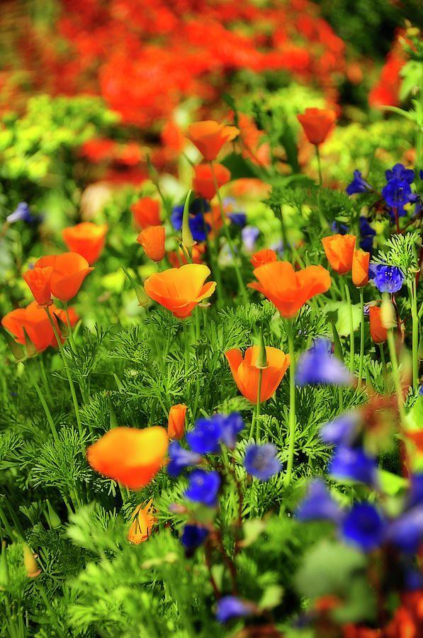 Чем больше разных видов цветов, тем ярче и красочнее выглядит газон