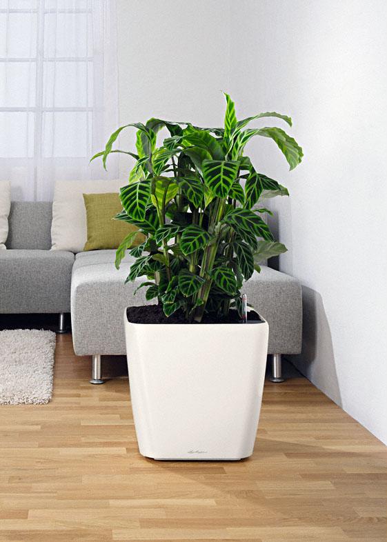 Растение Happy Plant Горшок Подсолнух миниатюрный hpn-17
