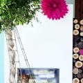 Фикус Бенджамина (75+ вариантов): уход в домашних условиях – полив, обрезка и размножение фото