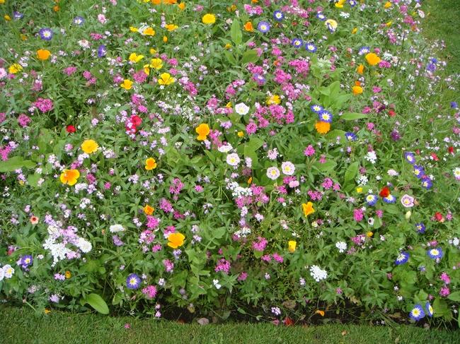 Многоцветье мавританского газона