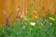 Фото 8 Мавританский газон (44 фото): простой способ украсить сад
