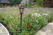 Фото 10 Мавританский газон (44 фото): простой способ украсить сад