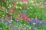 Фото 14 Мавританский газон (44 фото): простой способ украсить сад