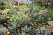 Фото 16 Мавританский газон (44 фото): простой способ украсить сад