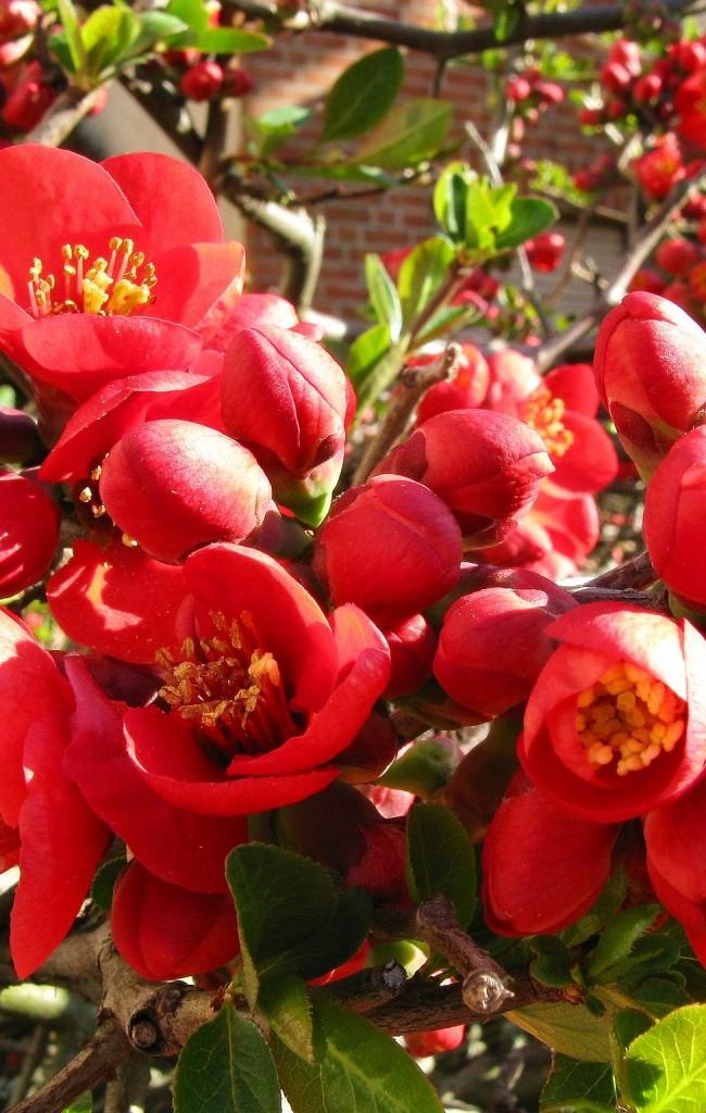 Полураскрытые бутоны цветков выглядят невероятно красиво