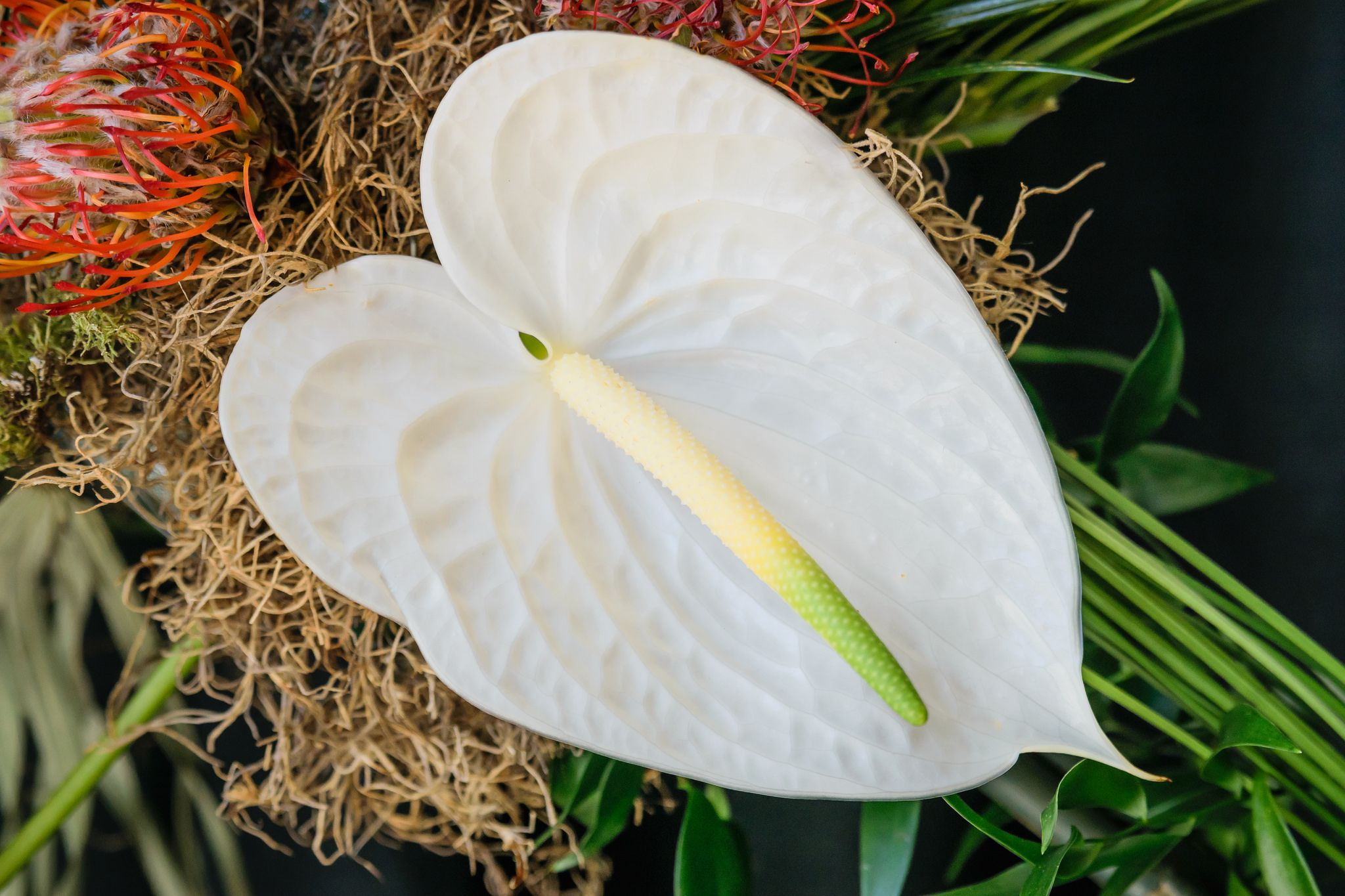 Нежность и изысканность - такие ассоциации вызывает белый антуриум