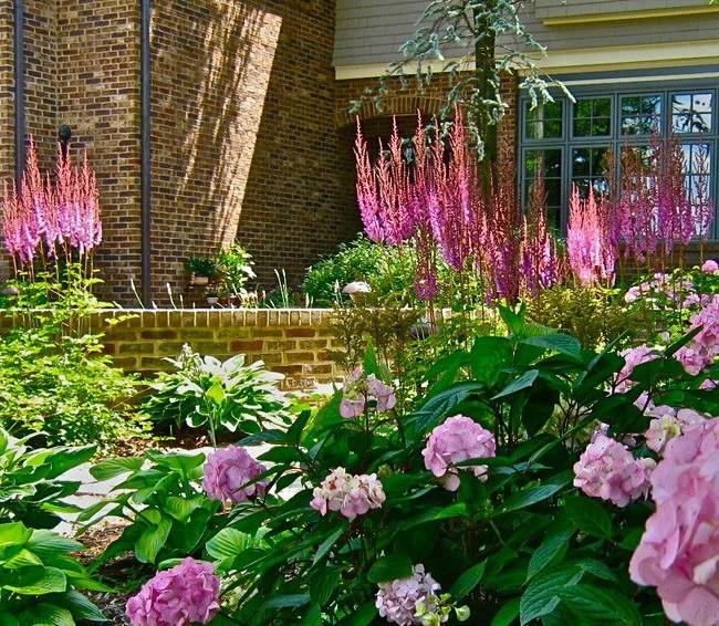 Высокие, стройные, яркие растения выгодно подчеркнут ландшафтный дизайн приусадебного участка