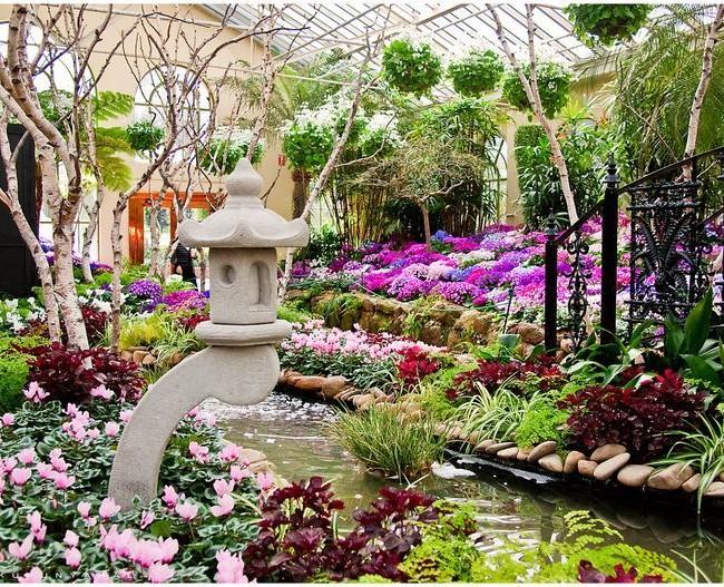 Комнатная цинерария с другими цветками смотрится просто великолепно