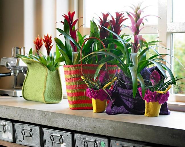 При своевременном обнаружении проблем с цветком большинство из них можно достаточно быстро решить