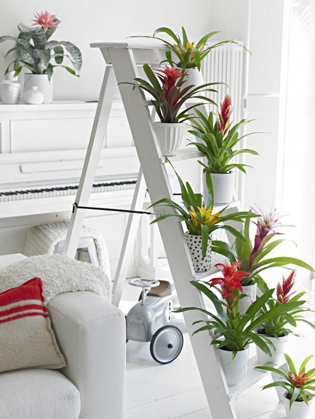 Декоративная композиция из бромелиевых на небольшой лестнице