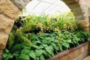 Фото 18 Цветок хоста (57 фото): красота и аромат в вашем саду