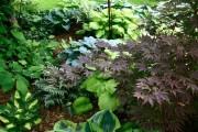 Фото 24 Цветок хоста (57 фото): красота и аромат в вашем саду
