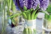 Фото 7 Гиацинт (65+ фото): посадка и уход в домашних условиях — советы опытных садоводов