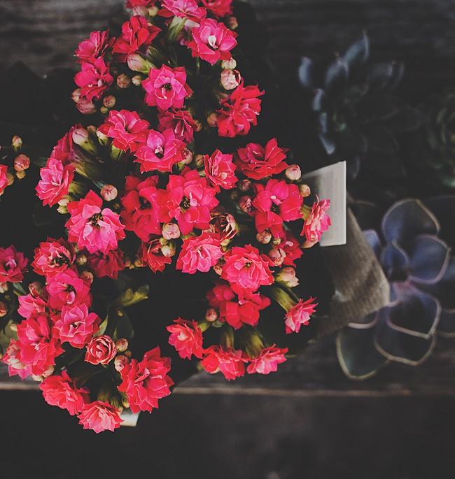 Каланхоэ выглядит очень привлекательно в период цветения, благодаря большому количеству пышных бутончиков, растение превращается в яркое цветовое пятно