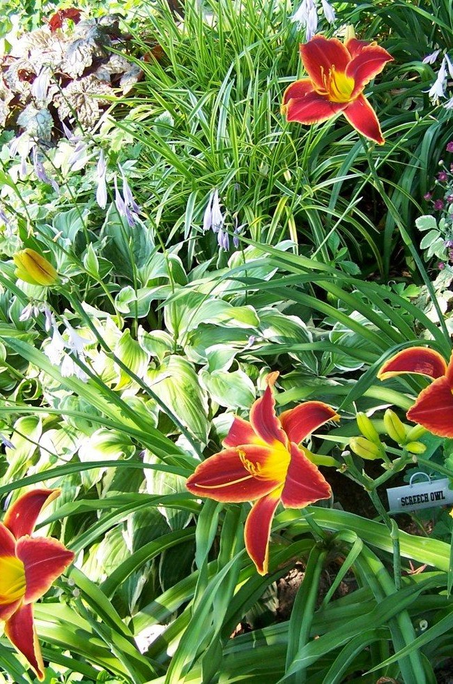 Яркие цветы очень выразительны на фоне зелени